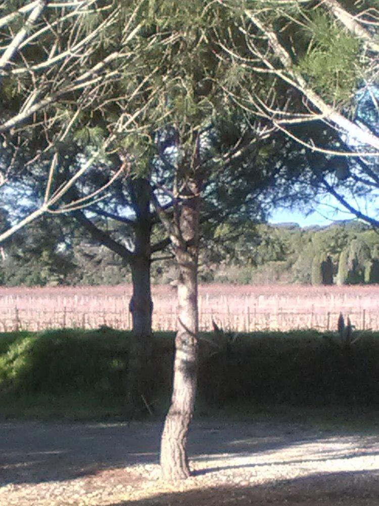 Aire camping-car à Agde (34300) - Photo 3
